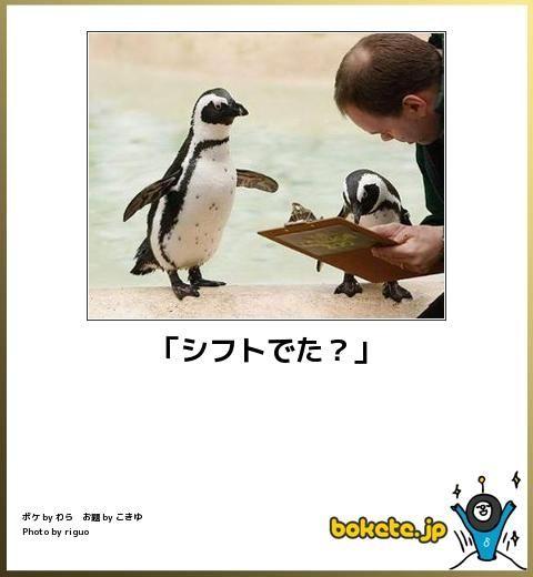 動物のボケて画像貼りましょう