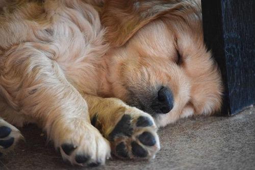 気持ち良さそうに寝てる犬の寝顔って良いよね12
