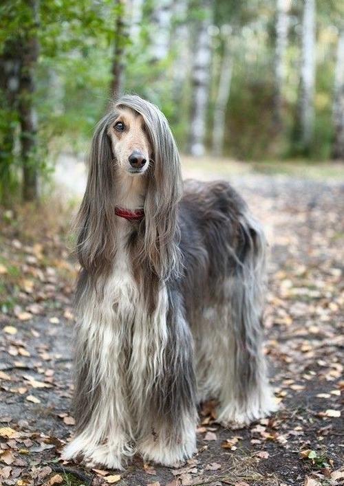 これより第一回美犬コンテストを開催します7
