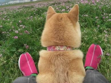 犬の後頭部を愛でて現実逃避しようぜ5
