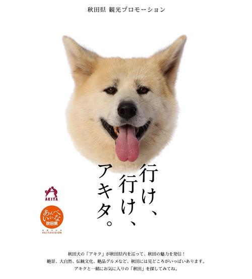秋田県のポスターの秋田犬が可愛すぎる13