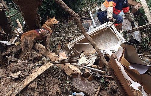 【西日本豪雨】84頭の災害救助犬が救助活動に参加