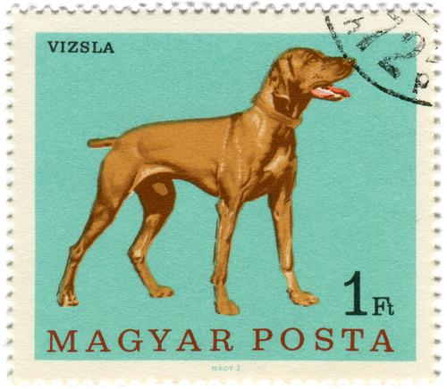犬が描かれた切手の画像をひたすら貼ってくよ8