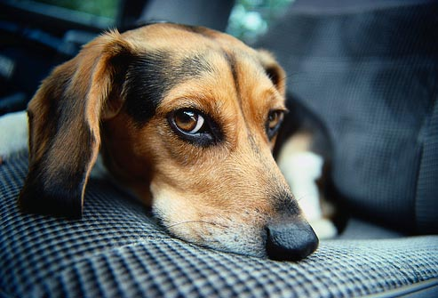 犬飼うヤツは真性のアホ