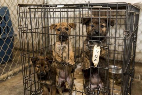 【社会】犬や猫の劣悪な飼育規制へ