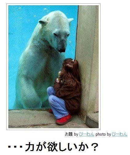 動物のボケて画像貼りましょう14