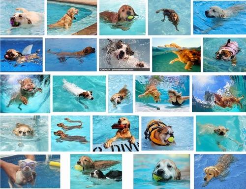 猛暑に負けそうだから「水遊びをする犬」画像でも見て涼もうや