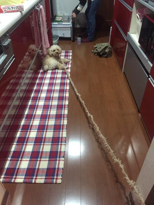 【悲報】犬、ほつれる