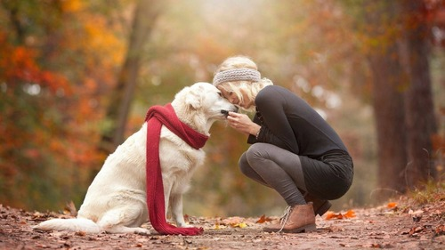 【朗報】ウチの犬、他の家の犬より可愛い