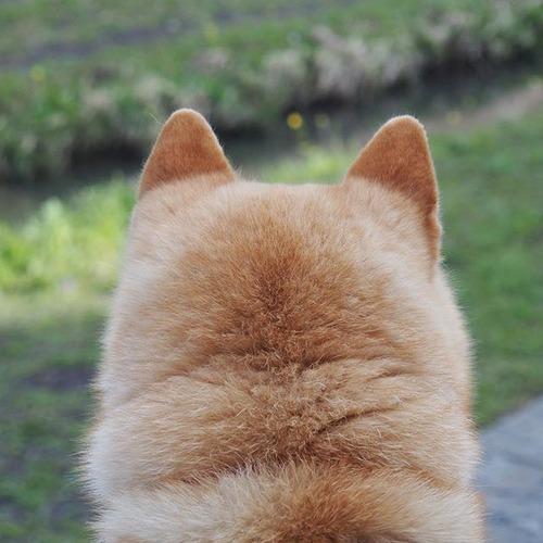 犬の後頭部を愛でて現実逃避しようぜ8