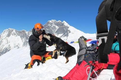登山隊に付いてきた野良犬さん、バルンツェ登頂に成功2