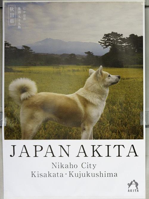 秋田県のポスターの秋田犬が可愛すぎる9