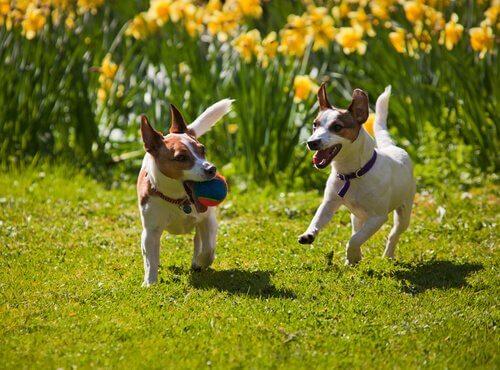 春の訪れを感じるような犬+花の画像16