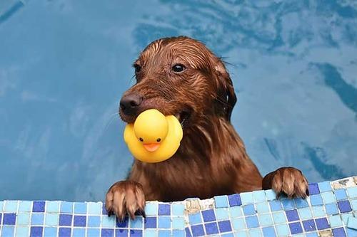 「泳ぐ犬」画像でも見て涼もう20