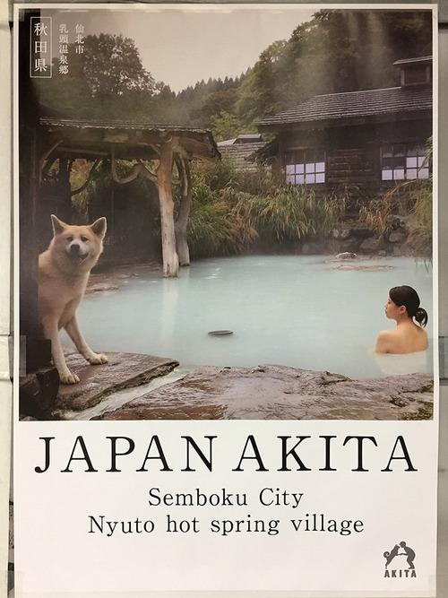 秋田県のポスターの秋田犬が可愛すぎる2