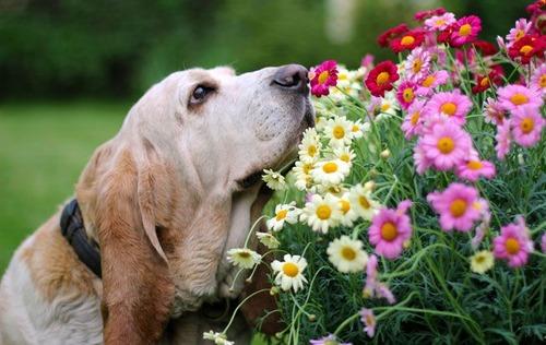 春の訪れを感じるような犬+花の画像15
