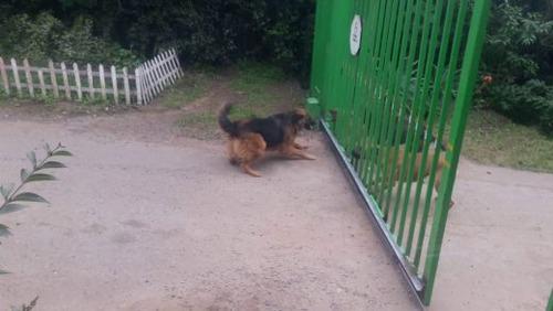 犬「ボケカスコラァ!柵が開いたらボッコボコにしたるぞ!」