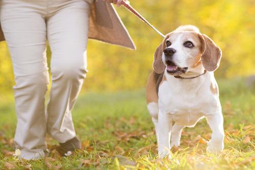 犬を散歩させる時は必ずリードを付けましょう