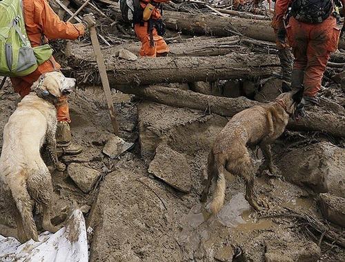 【西日本豪雨】84頭の災害救助犬が救助活動に参加2
