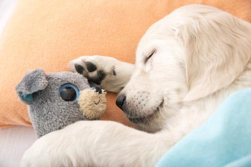 気持ち良さそうに寝てる犬の寝顔って良いよね28