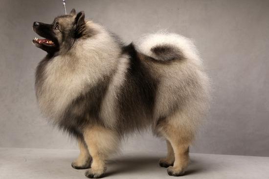 モフモフしたい犬画像スレ