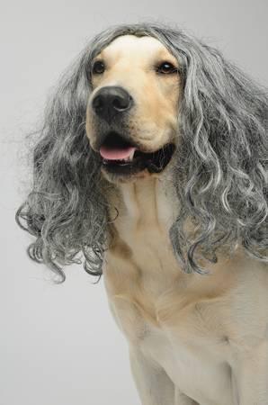 これより第一回美犬コンテストを開催します16