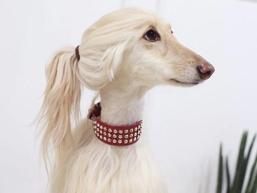 これより第一回美犬コンテストを開催します5