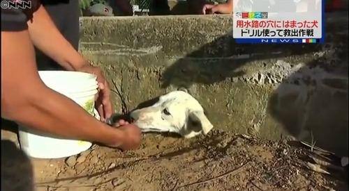 壁の穴にはまった野良犬ニッキを救え