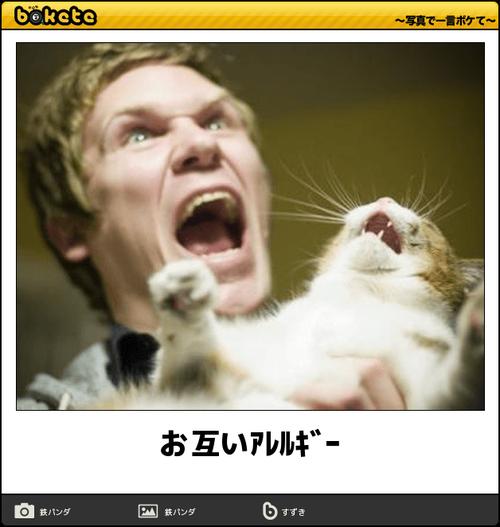 動物のボケて画像貼りましょう13