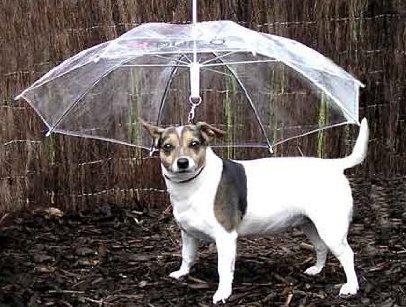 雨の中傘さして犬の散歩してる奴www