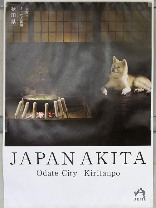 秋田県のポスターの秋田犬が可愛すぎる5