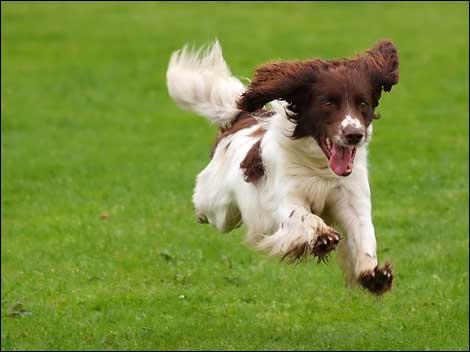 犬「散歩だァァァァァァァァァ