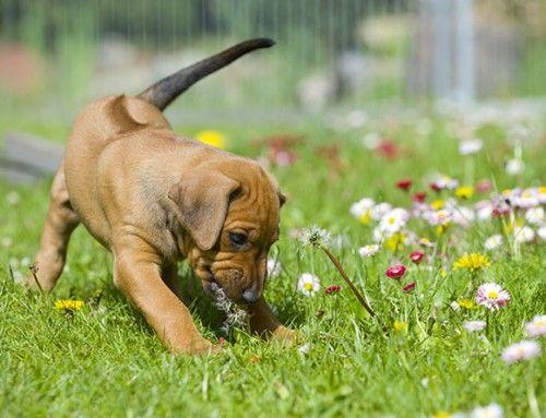春の訪れを感じるような犬+花の画像17