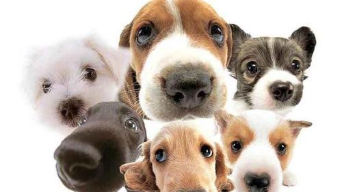 三大可愛い犬種、コーギー、柴犬