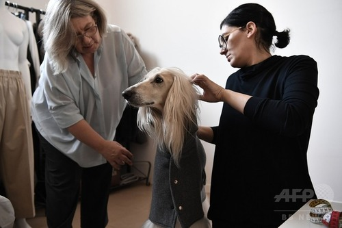 ミラノでは犬もオートクチュール2
