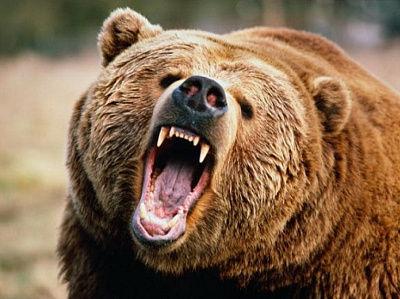 熊「おっ!犬がおるやんけ」