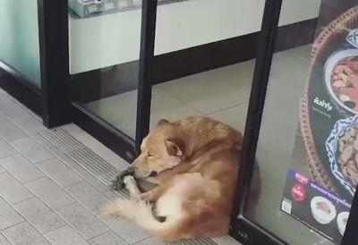 自動ドア VS 犬