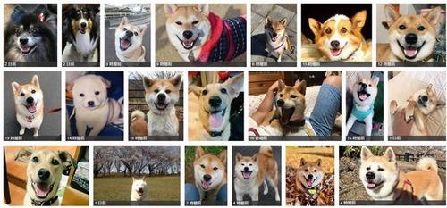 犬好きのHPがベホマ並に全回復するタグ「 #ピッカピカの笑顔でみんなみんなお元気になろう 」が可愛すぎてずーっと見てられる件