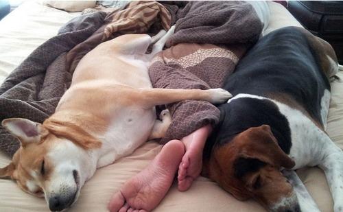気持ち良さそうに寝てる犬の寝顔って良いよね11