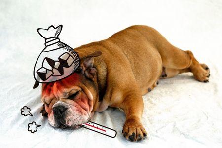 熱中症の犬猫が続々と来院。冷房つけてあげて