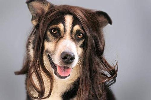 これより第一回美犬コンテストを開催します18
