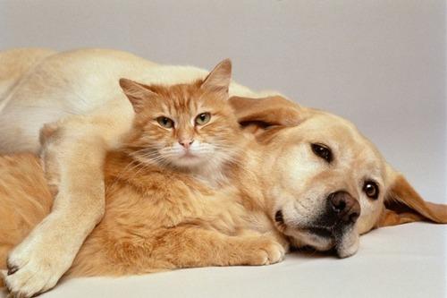 犬は猫の倍賢いことが判明