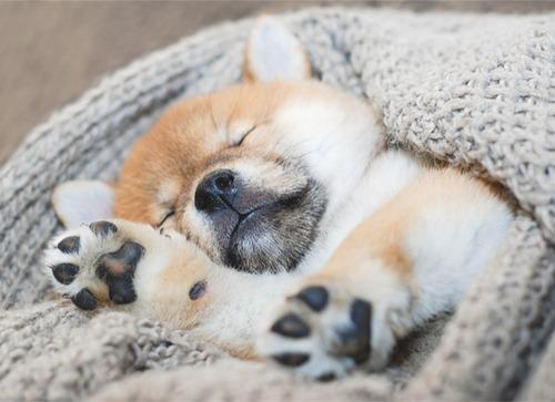 気持ち良さそうに寝てる犬の寝顔って良いよね4
