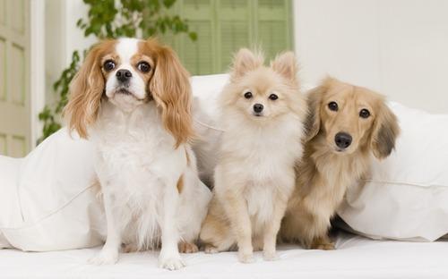 おすすめの犬種を教えて