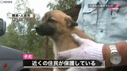 崖に取り残された子犬を救出