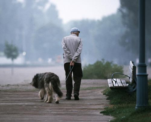 「犬 + お爺ちゃん」とかいう至高の組み合わせ