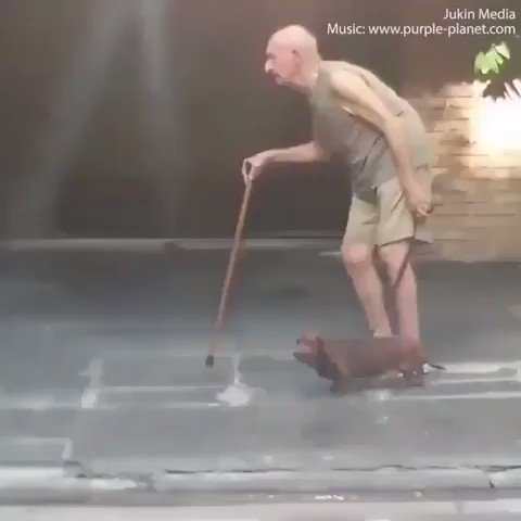 お爺ちゃんが犬の散歩に行った結果wwwww