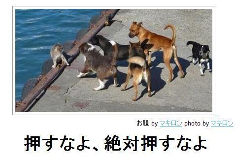 動物のボケて画像貼りましょう7