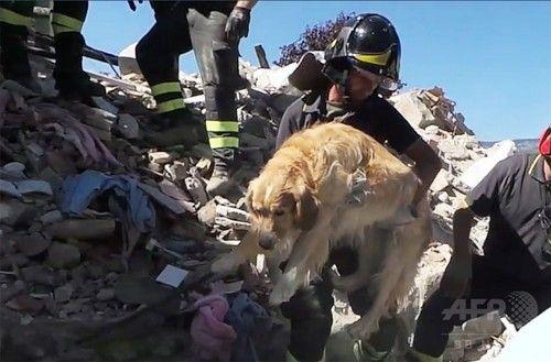 地震発生から9日、がれきの中から犬を救出 飼い主と再会 イタリア 3