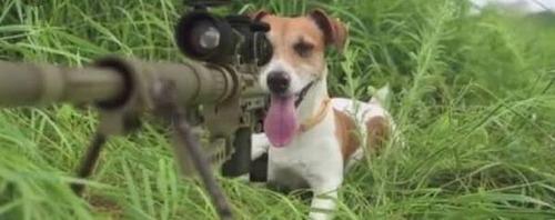 愛犬にピストルで「撃たれる」事件発生